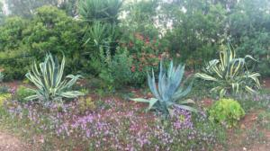 Algarve flower show